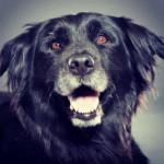 7 coisas que o seu cão idoso gostaria que soubesse