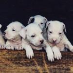 Jovens postam vídeo decapitando filhotes de cães