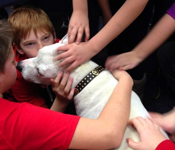 3.5.15-Beloved-Rescue-Dog-Oogy-Has-Died6-590x507