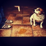 Tire o cheiro de xixi de cachorro da sua casa