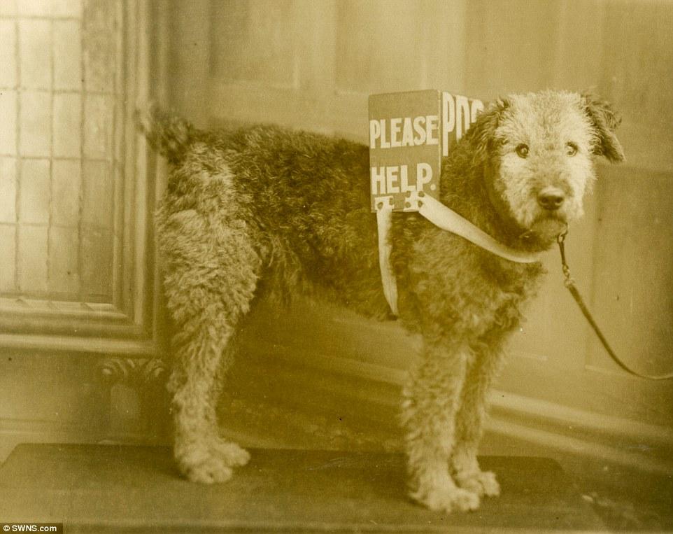 Cachorro trabalhando como mensageiro