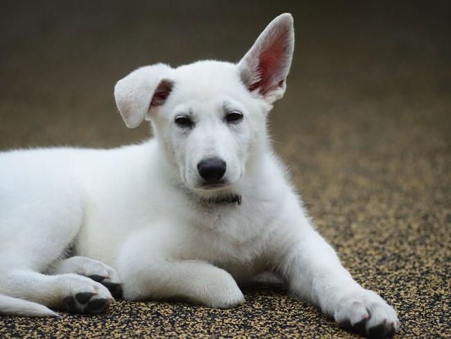 cachorro-sem-patinha-4