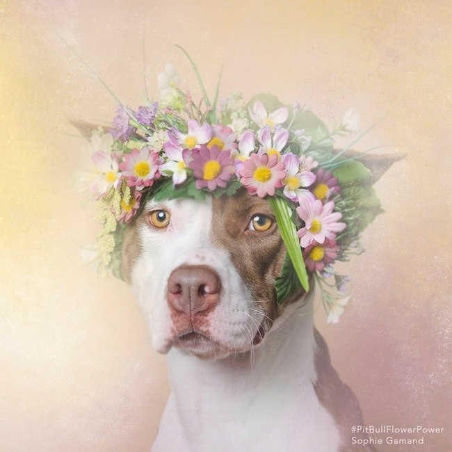 flower-crown-dog