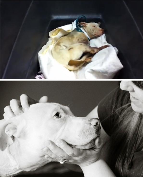 rinhas-cachorros-noticias-03
