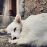 Cão de menino morto no Alemão chora todos os dias