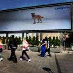 Campanha interativa promove adoção de cães