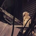Cães resgatados salvam vidas no Nepal