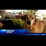 Cão idoso salva mulher de 89 anos