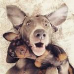 9 coisas para pensar antes de ter o 2º cachorro