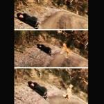 Mulher se finge de morta para resgatar cão
