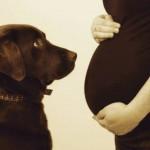 Grávidas e cachorros: uma série muito fofa
