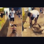 """Cão """"chora"""" de emoção ao reencontrar o dono"""