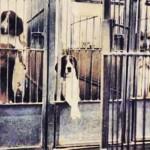Empresas se negam a levar animais para pesquisa