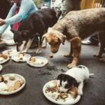 Cães sobreviventes do Nepal ganham ajuda