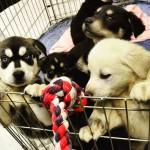 Cachorroterapia ajuda eliminar o estresse