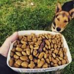 Como ajudar um cachorro de rua