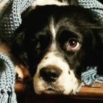 Como proteger o seu cão do frio