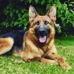 Empresas não podem matar cães saudáveis