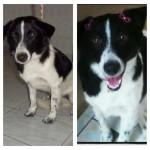 O antes e depois de animais resgatados