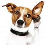 Como escolher o nome ideal para o cachorro