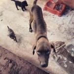 Mulher é multada ao viajar e deixar cães sem comida