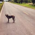 Como socorrer um cão atropelado