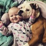 Como apresentar o cachorro para o bebê