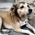 Capital de Cuba dá atendimento a cães de rua