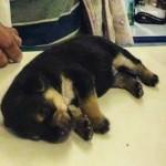 Morador de rua resgata cão e leva ao veterinário