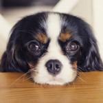 Eduque seu cão em 10 dicas