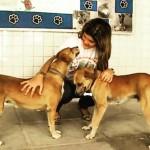 Escola cria projeto que incentiva a adoção de cães
