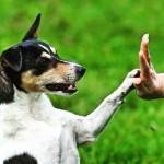 5 dicas para melhor o adestramento do seu cão