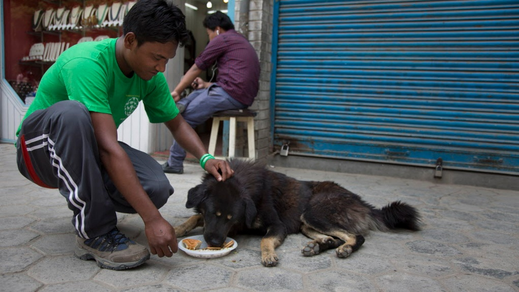 "KHATMANDU, NEPAL-- May 7, 2015--Ravi Das with Human Society International's Animal Rescue and Disaster Response Team feeds lunch to street dogs alongside supporters of ""Dog Mother,"" who held a memorial for the dogs who died 13 days ago in the earthquake. A special special meal was prepared and subsequently delivered to street dogs around the city. PHOTO BY JODI HILTON"