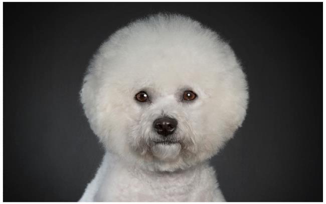 9. Quando você percebe que seu novo corte de cabelo te faz parecer um espanador