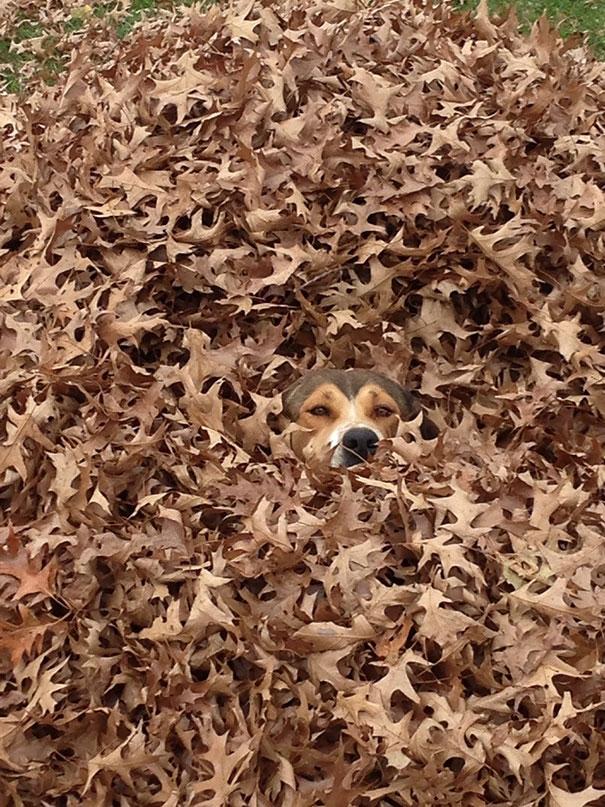 dogs-hide-seek-1__605