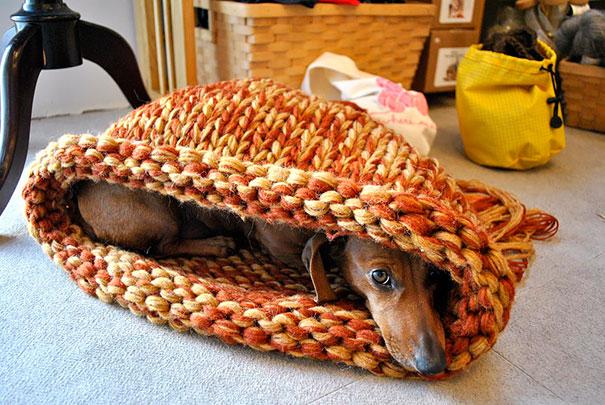 dogs-hide-seek-2__605
