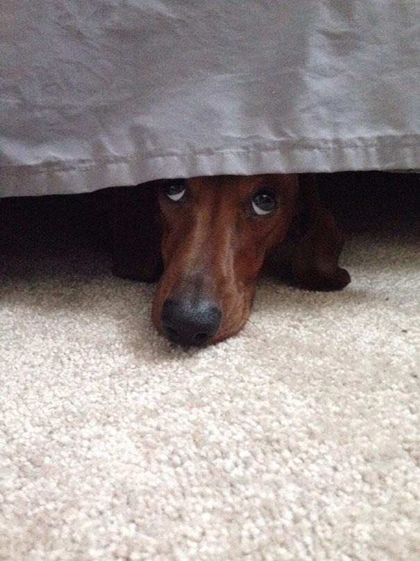 dogs-hide-seek-4__605