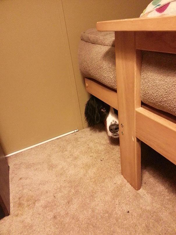 dogs-hide-seek-7__605