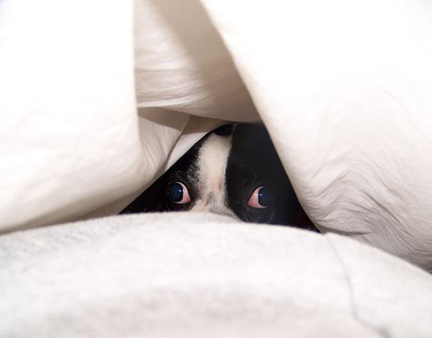 dogs-hide-seek-9__605