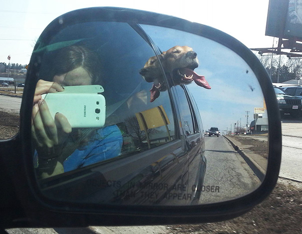 dogs-on-joyrides-26__605