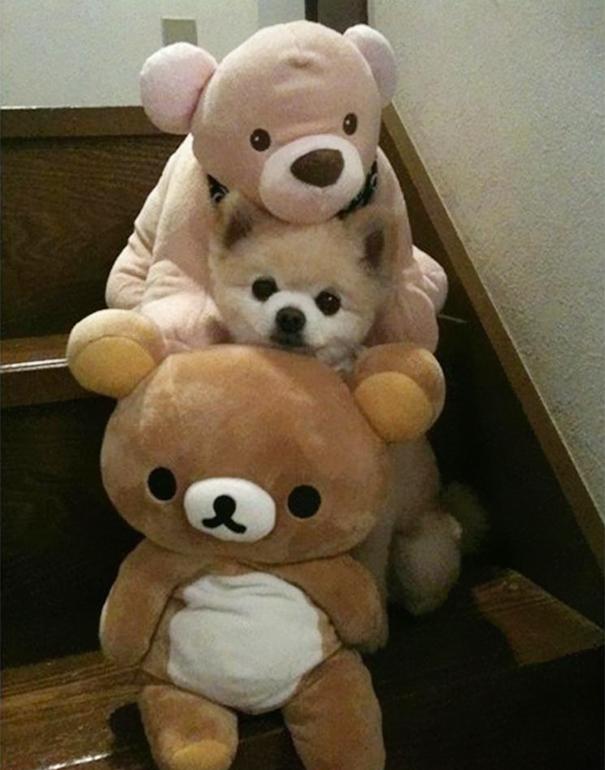 hiding-ninja-funny-dogs-281__605