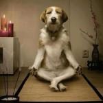 Dicas de relaxantes naturais para cães