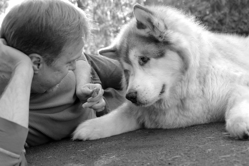 sessao-fotos-cachorro-03