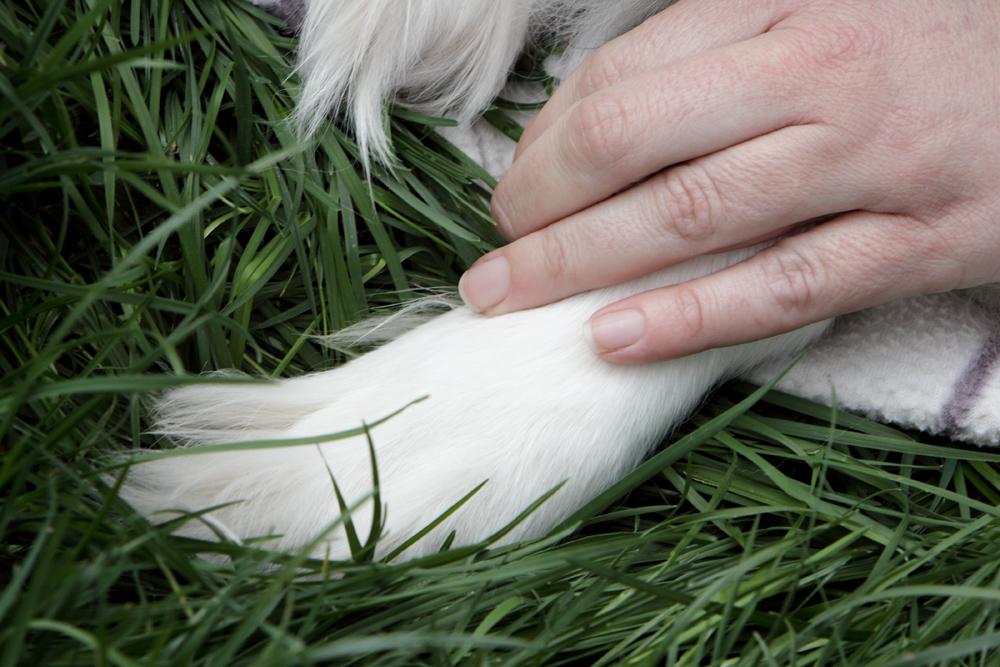 sessao-fotos-cachorro-04