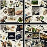 Petição sugere  ensino sobre direitos animais em escolas