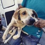 Cão é abandonado na Ponte Rio-Niterói