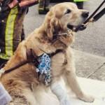 Cão se joga na frente de ônibus para salvar a dona