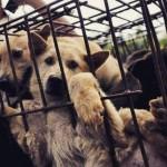 10 mil cães são mortos em festival na China