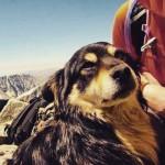 Cão é regatado do pico mais alto da Polônia