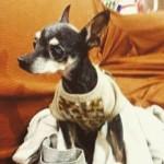 Cão cego é roubado em casa em Praia Grande